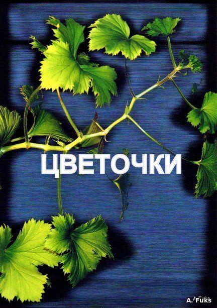 альбом - 4