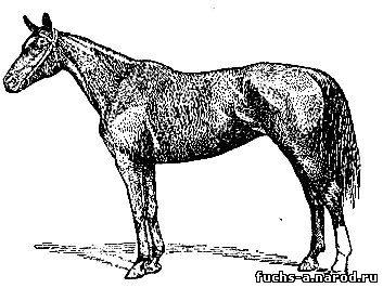Будённовская порода