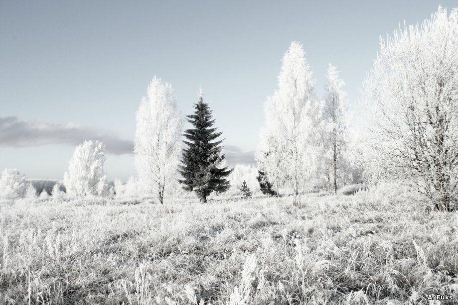 Пейзаж — Иней