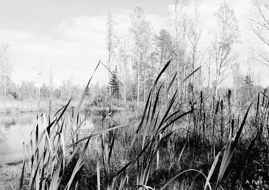 Пейзаж — Камыш