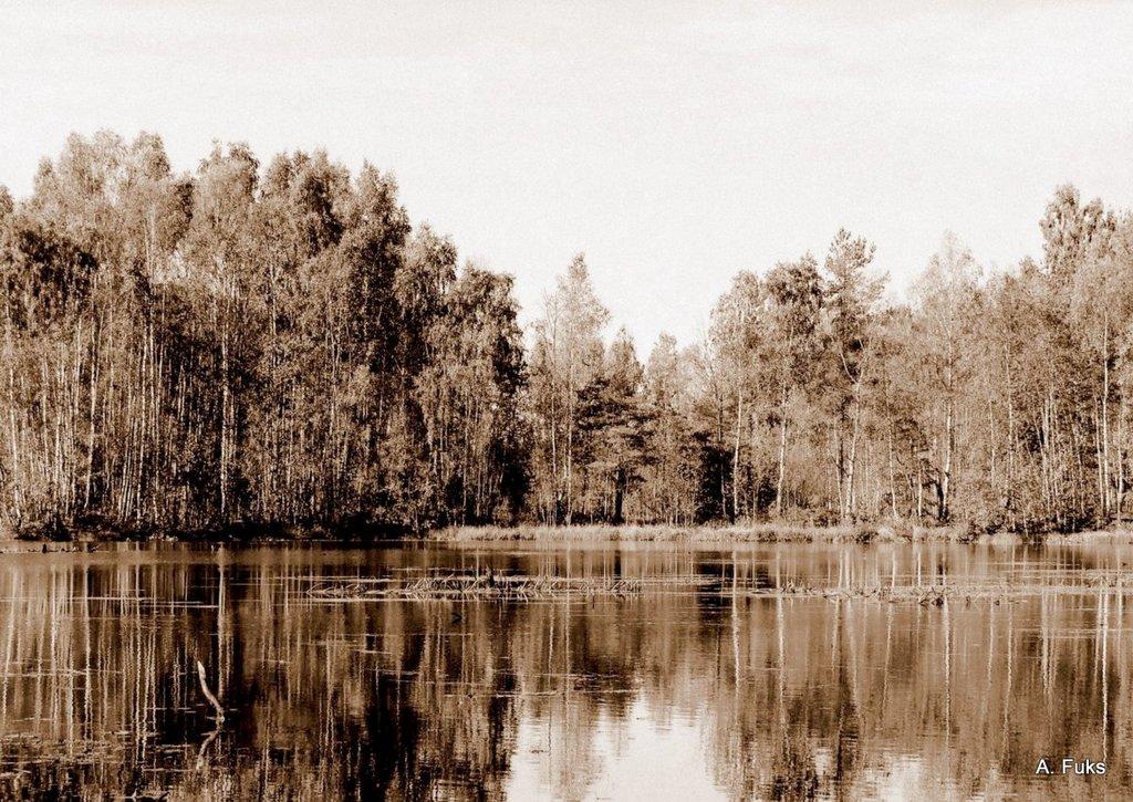 Пейзаж — Водоём