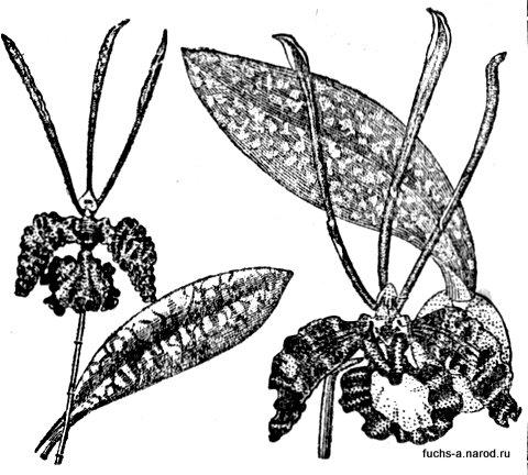 орхидные