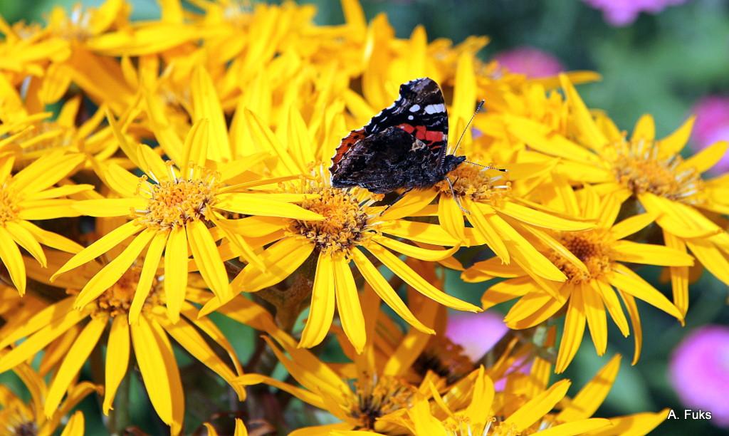 Цветок с бабочкой - фото